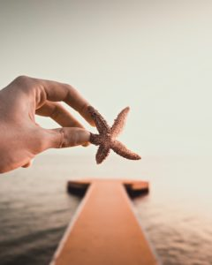 Person Holding Starfish